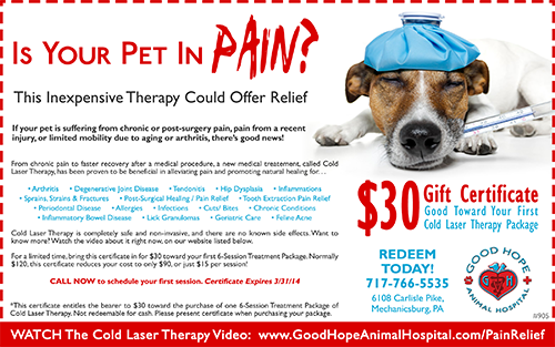 Cold Laser Therapy Coupon