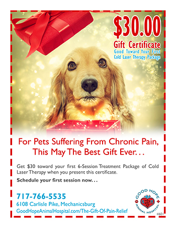 Holiday Laser Therapy Promotion