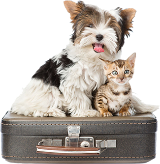 Boarding Services for Dogs, Cats & Pocket Pets at Good Hope Animal Hospital in Mechanicsburg PA