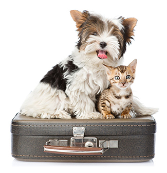 Dog & Cat Boarding Services at Good Hope Animal Hospital in Mechanicsburg PA