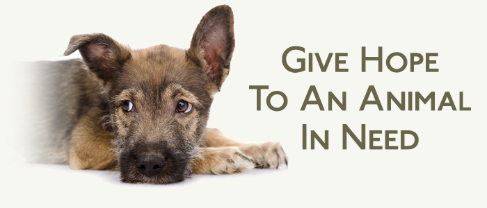 Good Hope Animal Hospital's Paws of Hope Care Fund