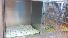 Canine Cages 2 - Dog Boarding at Good Hope Animal Hospital