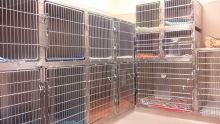 Cat Accommodations 1 - Cat Boarding at Good Hope Animal Hospital