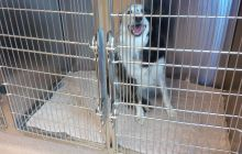 Extra Large Cage 3 - Dog Boarding at Good Hope Animal Hospital