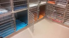 Feline Cages - Cat Boarding at Good Hope Animal Hospital