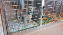 Large Canine Cage - Dog Boarding at Good Hope Animal Hospital