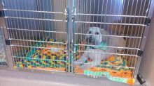 Extra Large Canine Cage 1 - Dog Boarding at Good Hope Animal Hospital