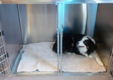 Extra Large Canine Cage 2 - Dog Boarding at Good Hope Animal Hospital